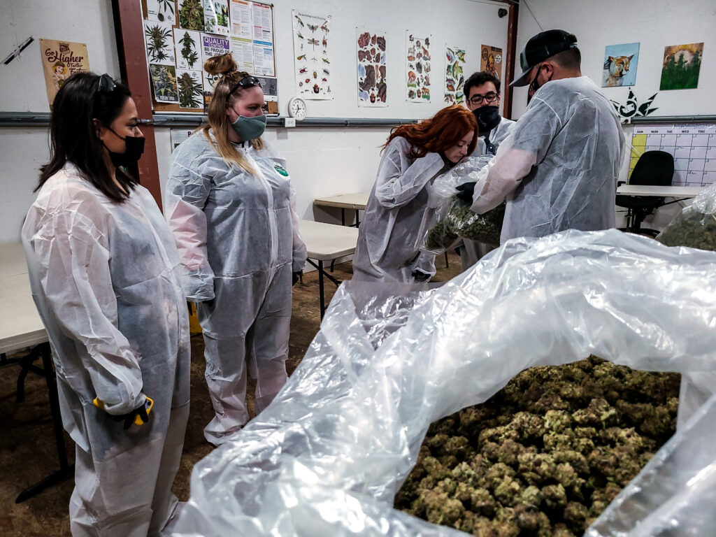'Growing Like a Weed' Farm Tour with Piece of Mind Cannabis