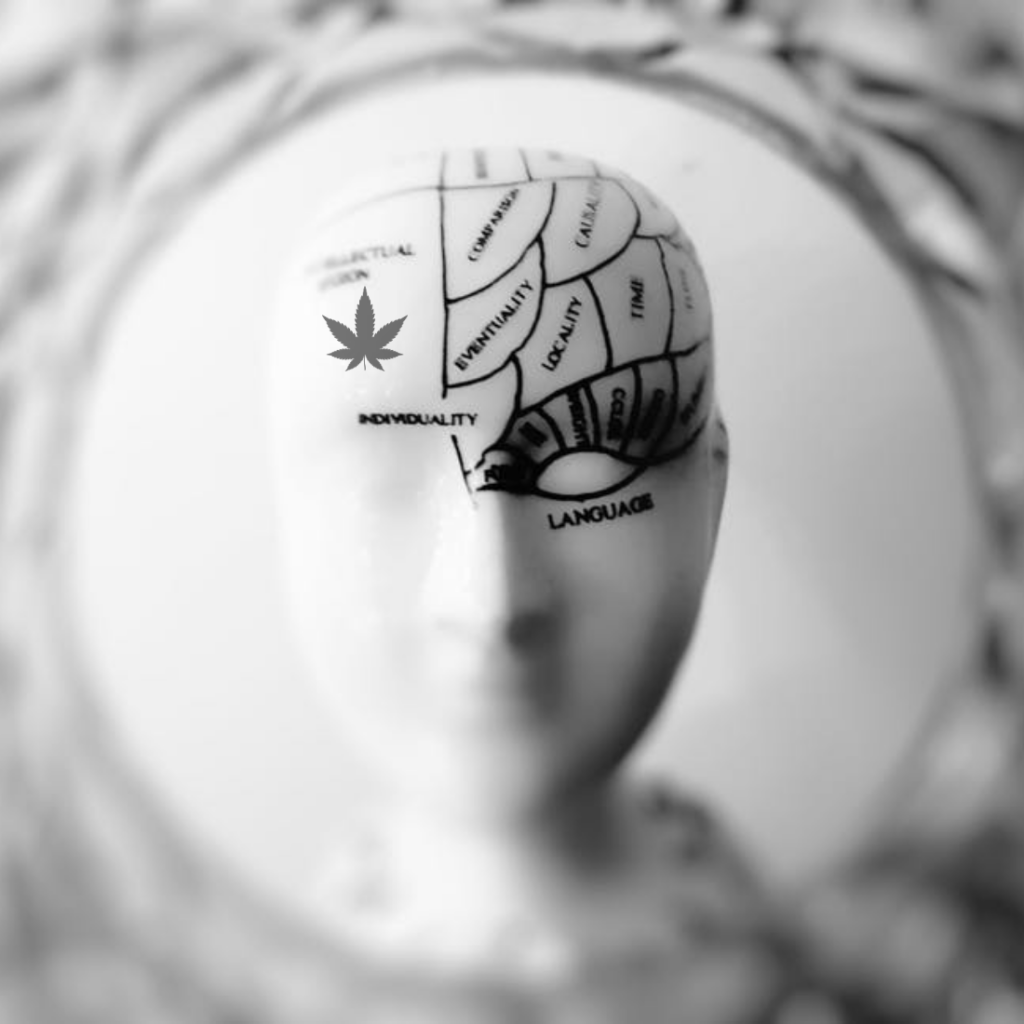 A Look at Cannabis and Brain Health